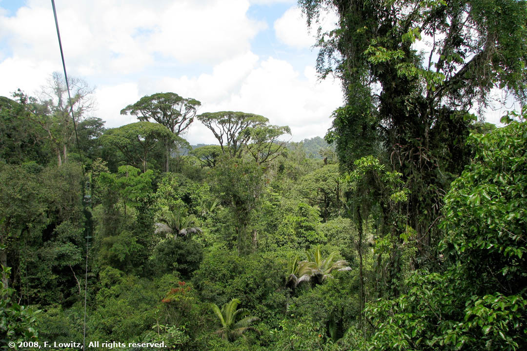 Rainforest Canopy—Introduction